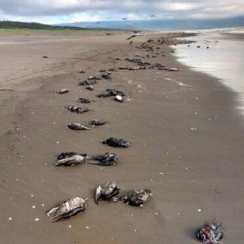 Завхан аймагт усны шувууд олноороо үхсэн байхыг олжээ