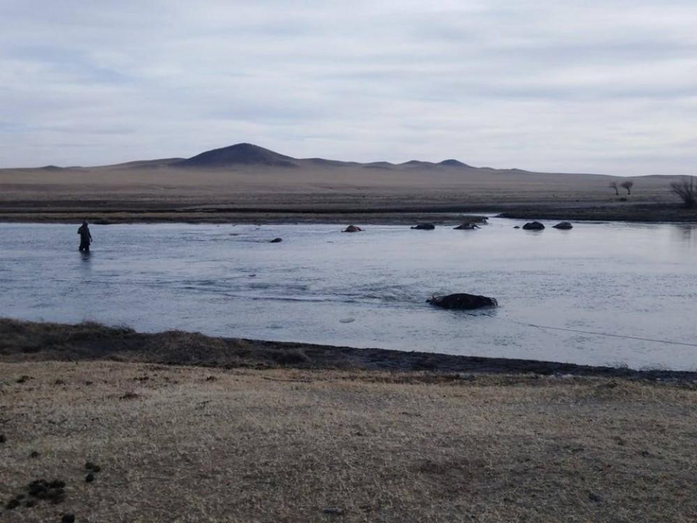 Хэрлэн голоос 500 орчим малын сэг зэмийг гаргаж, цэвэрлэв